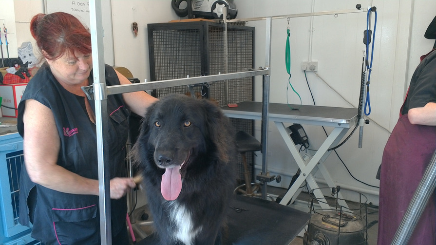 Cat And Dog Grooming Service At Alconbury Hill